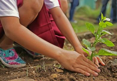 Organização ajuda a recuperar áreas desmatadas do Brasil e pede doação de árvores; saiba como
